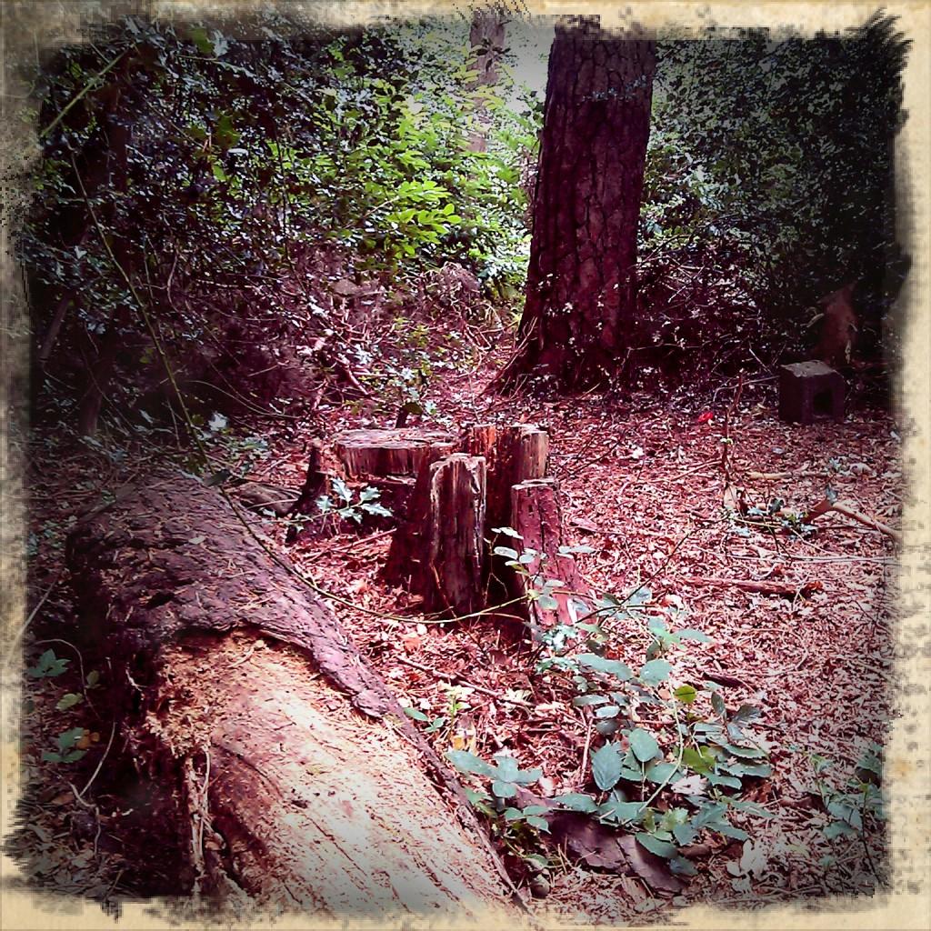 Urban forest scene